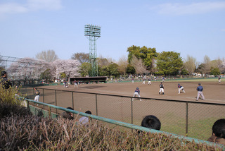 sakura20110410-02.jpg